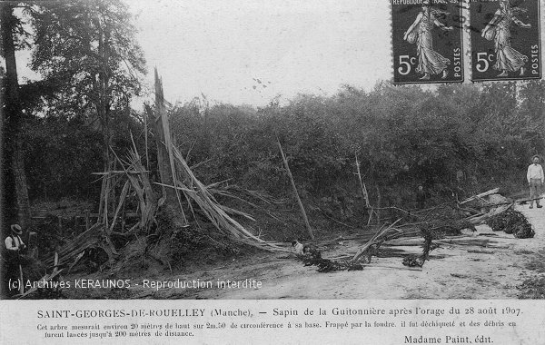 SAINT-GEORGES-DE-ROUELLEY (Manche) - Sapin de la Guitonnière après l'orage du 28 août 1907 - L'arbre est complètement pulvérisé