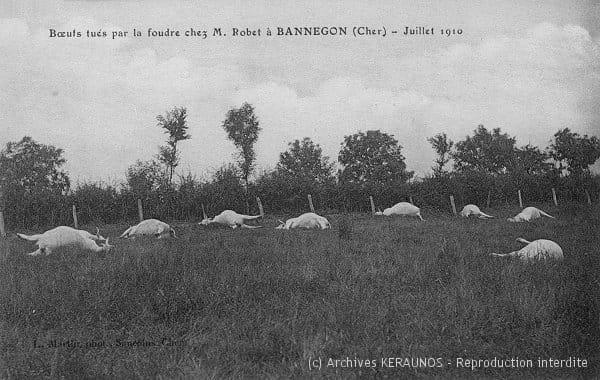 BANNEGON (Cher) - Boeufs tués par la foudre chez M. Robet - Juillet 1910