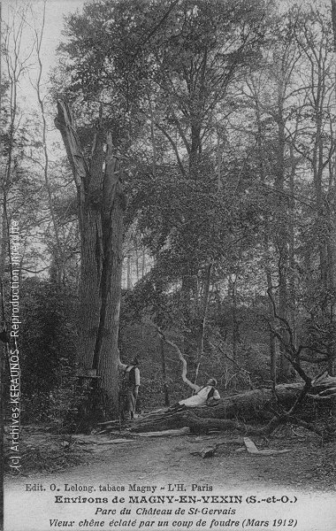 SAINT-GERVAIS (Val-d'Oise) - Vieux chêne éclaté par un coup de foudre (mars 1912)