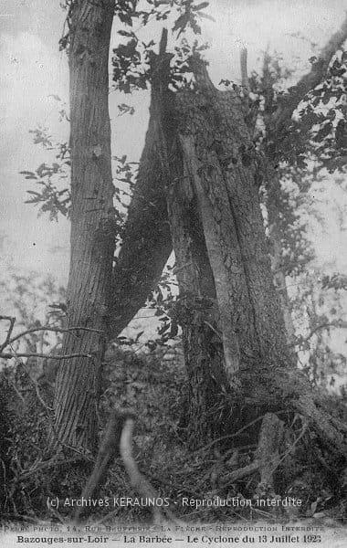 BAZOUGES-SUR-LE-LOIR (Sarthe) - La Barbée - Dégâts sur la végétation après l'épisode venteux du 13 juillet 1923